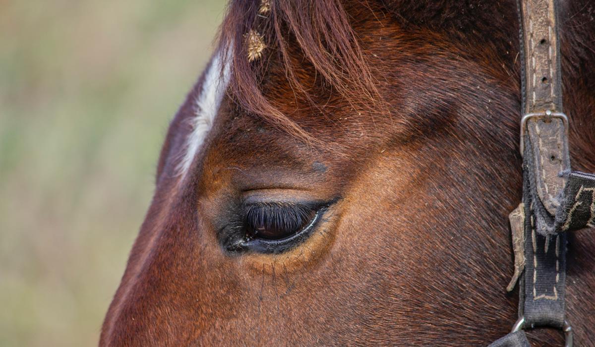 Teilnahme am Horse and Spirit Festival