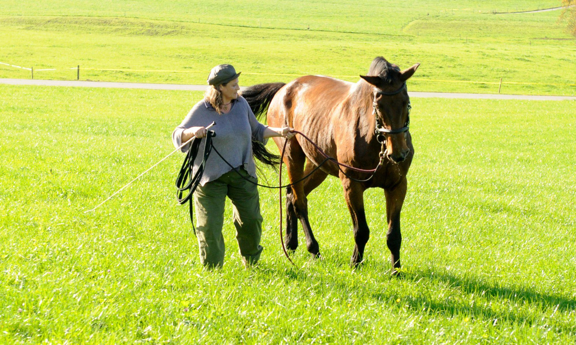 Bewegungsapparat bei Pferden